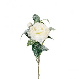 Camelia rose, L31 cm, white - Mr Plant