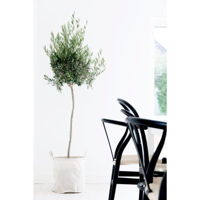 basket-beige-olive-tree